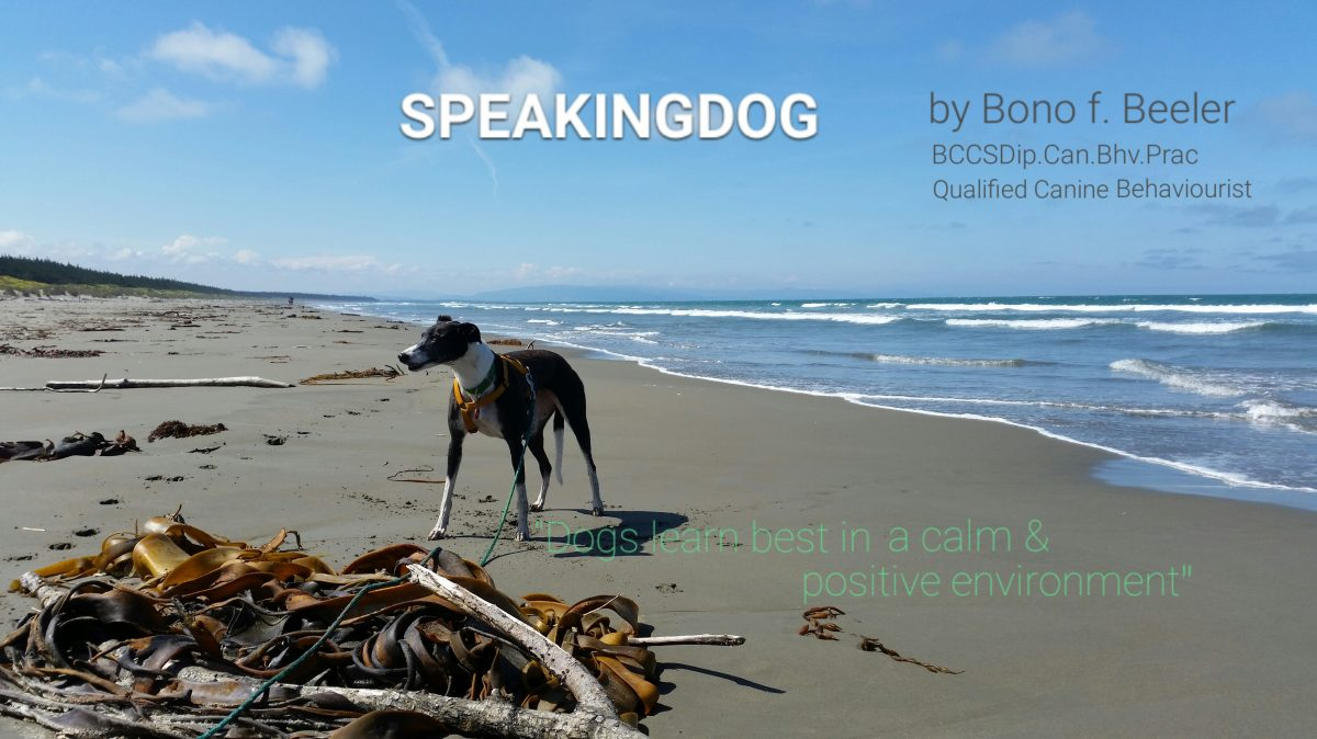 speakingdog.net Blog